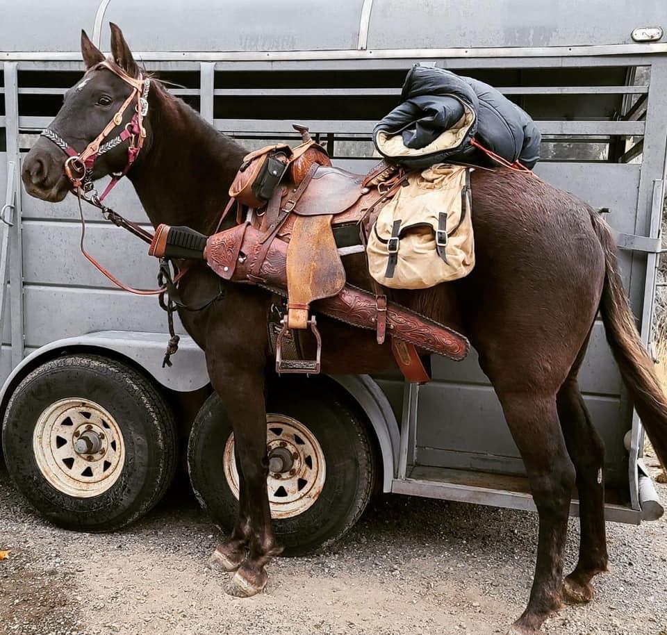 Bashkir Curly Trail Horse
